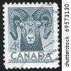 CANADA - CIRCA 1953: stamp printed by Canada, shows sheep, circa 1953 - stock photo