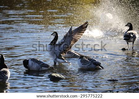 canada goose stockholm