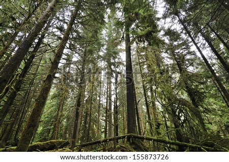 Canadian Forest with moss - stock photo