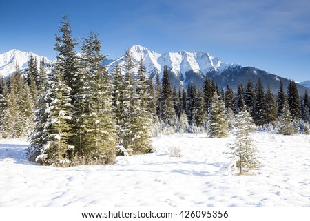 Canadian mountain winter landscape, snow covered ground with lightly snow dusted pine trees, and snow capped mountains in the background. Clear blue sky - stock photo