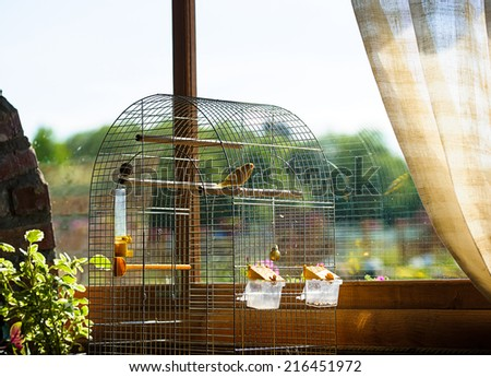 canary in a cage - stock photo