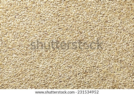 Canary seed - stock photo