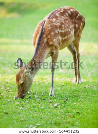 candid shot of a deer