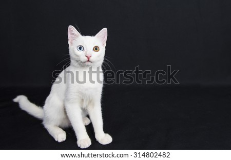 Candid white pussy cat with one green eye and one blue eye - stock photo