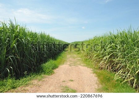 cane - stock photo