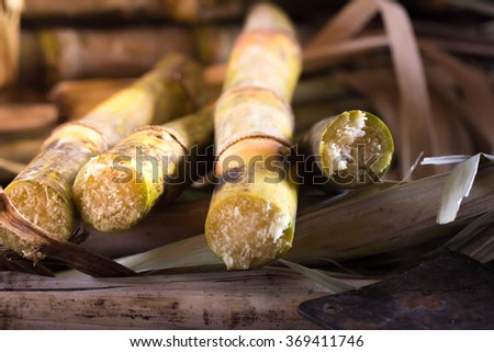 cane - stock photo