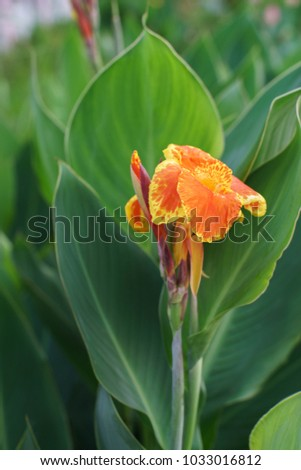 lily hindu singles About leaves the banana leaves are used as decoration and for serving dishes for auspicious ceremonies in hindu and buddhist cultures coconut palm leaves are used to create shade or tropical decoration.