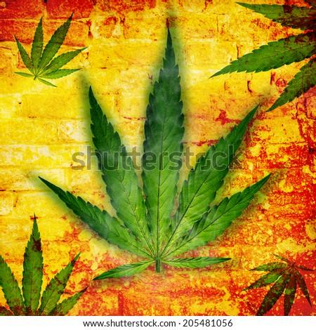 Cannabis leaf, marijuana, close-up. - stock photo