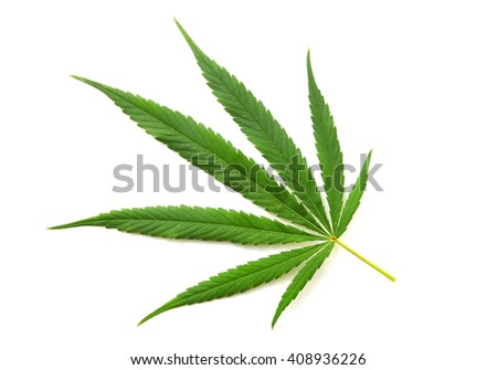 Cannabis leaf, marijuana isolated on white background - stock photo