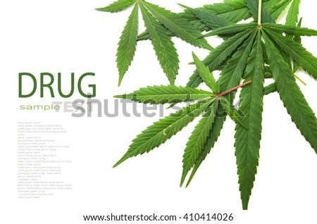 Cannabis leaf, marijuana isolated on white background copy space - stock photo