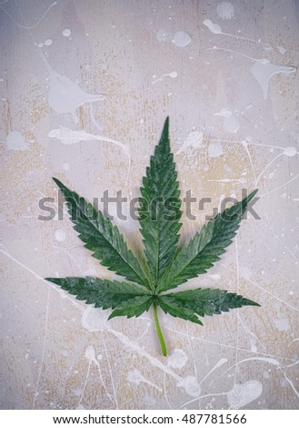 Cannabis leaf, marijuana isolated over white and grey grunge wood background