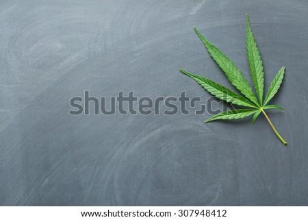 cannabis leaf on a chalkboard - stock photo