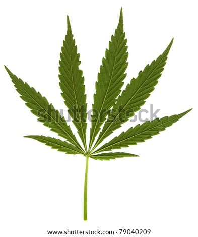 Cannabis leaf on white background