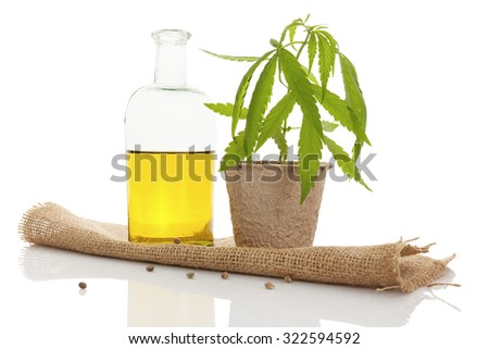 Cannabis oil and young cannabis plant isolated on white background.  - stock photo