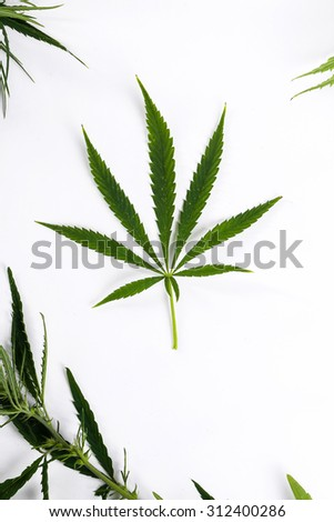 Cannabis on a white background
