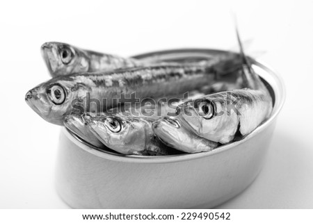 Canned sardines - stock photo