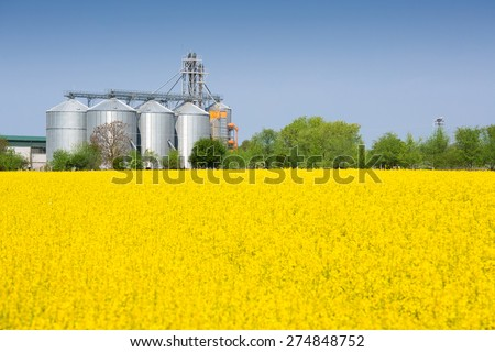 Canola field and farm silo - stock photo