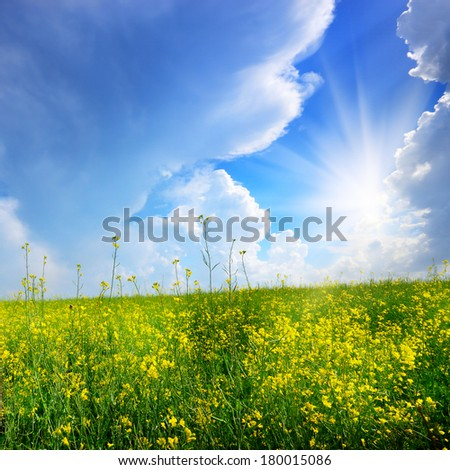 Canola field under clouds and sun - stock photo