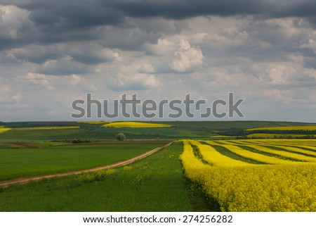 Canola fields in remote rural area - stock photo