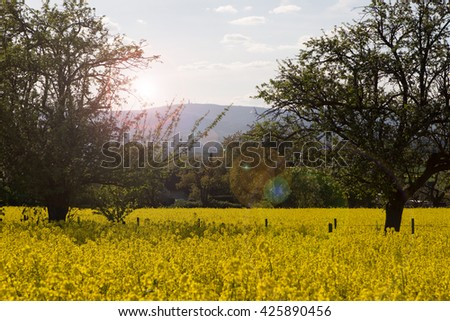 Canola fields in the spring near Frankfurt, Germany