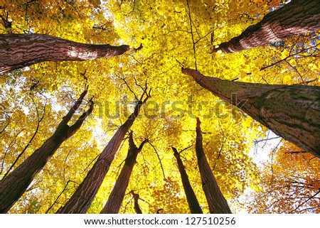 Canopy of a forest - low angle - stock photo