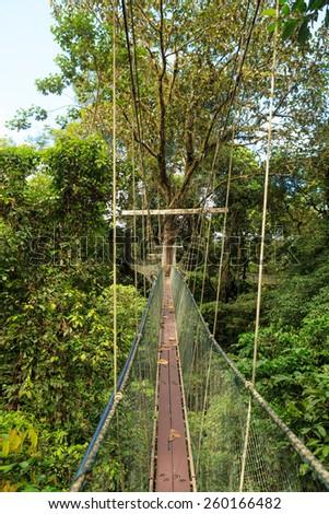 Canopy walk at park - stock photo