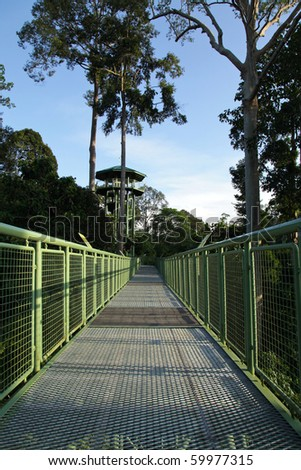 Canopy Walk In Sepilok, Malaysia! - stock photo