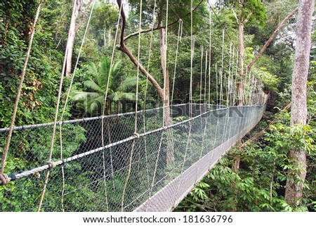 Canopy walk in Taman Negara National Park, Malaysia. - stock photo