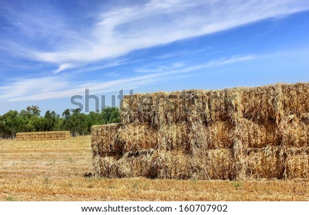 canted hay harvested in large briquettes, food for cattle for winter - stock photo