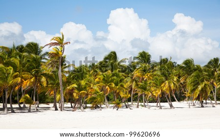 Cap cana beach with white sand and palms - stock photo