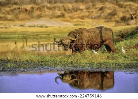Cape Buffalo at Lake Kariba Zimbabwe - stock photo