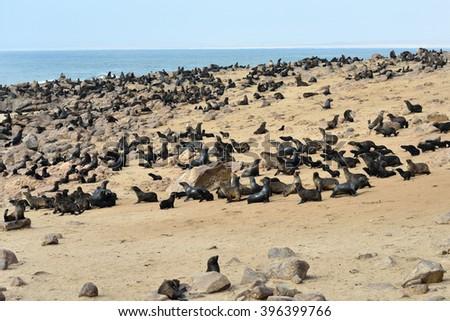 Cape fur seals on the stone coast of Atlantic ocean. Seal colony on the Cape Cross, Skeleton Coast, Namibia - stock photo