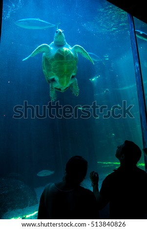 CAPE TOWN, SOUTH AFRICA - 1 FEBRUARY, 2015:  People admire the tropical the loggerhead turtle in the aquarium of two oceans in Cape Town.