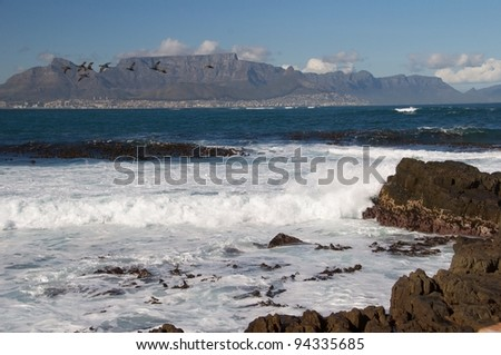 Capet own from Robbin Island