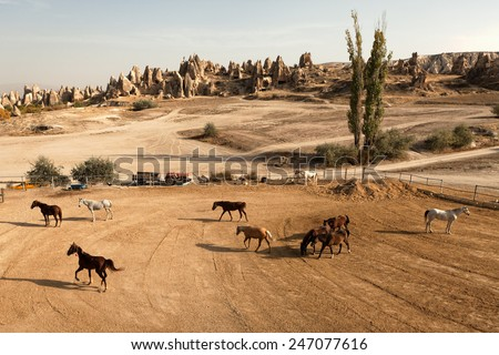 Cappadocia rock formations and horses in Goreme - stock photo