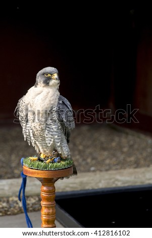 Captive Peregrine falcon (Falco peregrinus) perched on a wooden stool in front of a shadowed barn.