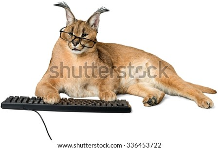 Caracal in Glasses Typing on a Computer Keyboard - Isolated - stock photo