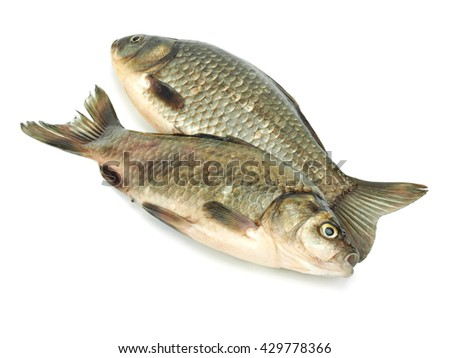 Carassius - crucian carp on a white background     - stock photo