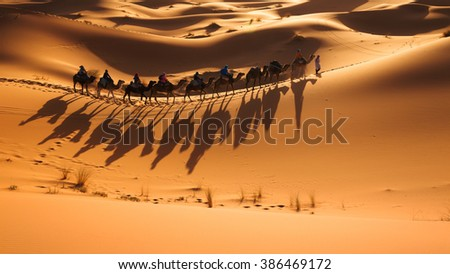 Caravan going through the sand dunes in the Sahara Desert, Morocco