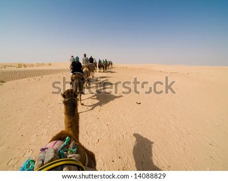 Caravan of camels on Sahara - stock photo