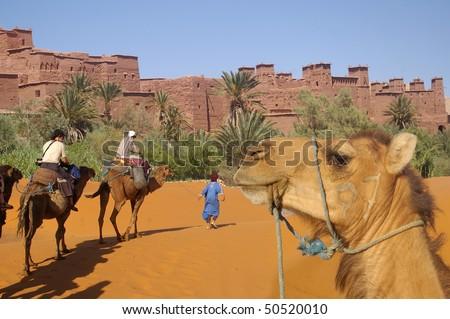 caravan of desert - stock photo