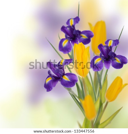 Card with tulips and irises by day of mother - stock photo