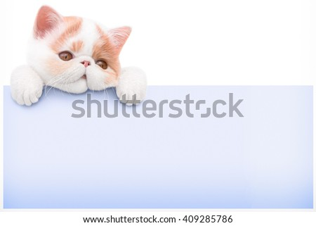 cardboard and a kitten on a white background - stock photo