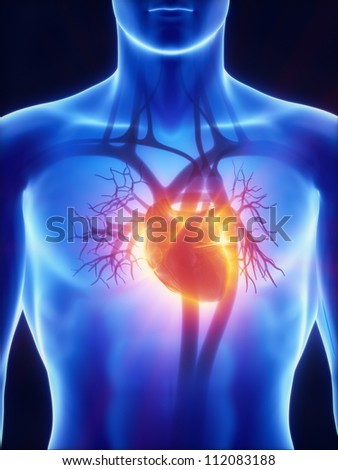 Cardiovascular system with glowing heart     **** Also as footage available in my portfolio