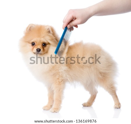 care for dog hair. looking at camera. isolated on white background - stock photo
