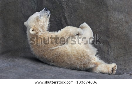 Careless childhood of a polar bear cub - stock photo