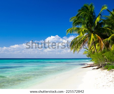 Caribbean Beach and Palm tree - stock photo