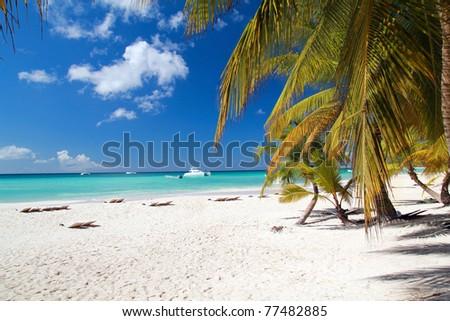 Caribbean beach with palms, paradise - stock photo