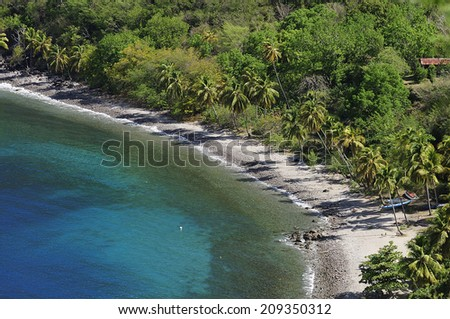 Caribbean beach with turquoise blue water and palm tree