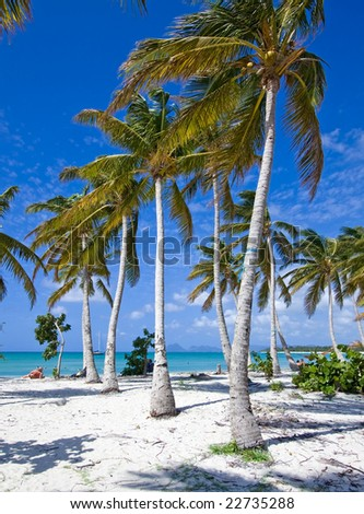 caribbean beach with white sand blue sky and many palm trees - stock photo
